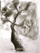 Fusain - 21 x 14 cm - 2000